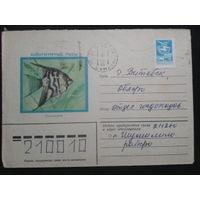 1982 Скалярия прошло почту