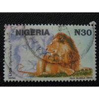 Нигерия. Лев.