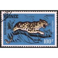 Кошки. Гвинея. 1962. Леопард, 100 фр. Марка из серии. Гаш.