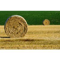 Повышение производительности труда в организации Агропромышленного комплекса Республики Беларусь - экономика и управление на предприятии промышленности, ООО АгроСервисСтандарт - дипломная работа