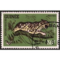 Кошки. Гвинея. 1962. Леопард, 30 фр. Марка из серии. Гаш.