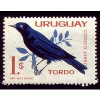 1 марка 1962 год Уругвай Ворона 945