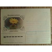 1983 не маркированный конверт Нотокактус