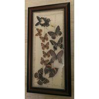 Панно бабочки тропические засушенные