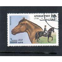 Афганистан. Ми - 1908.Лошади. Порода Ганноверская. Конный спорт. 1999.