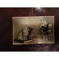 Почтовая карточка Котята, 1956 год