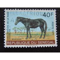 Сенегал 1971 г. Фауна.