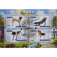 Собаки, блок, Руанда