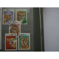 Марки - Мадагаскар 1988 фауна дикие кошки 5 марок и блок