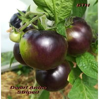Семена томата Antho Striped Dwarf
