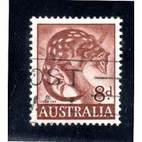 Австралия.Ми-295. Култан пятнистый (Dasyurus maculatus). Серия: ЗоологическаяI. 1960.