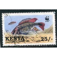 Кения. Редкие виды рыб