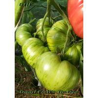 Семена томата Dwarf Fred's Tie Dye - осталось 2 пакетика