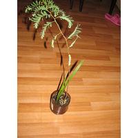 Растения экзотические