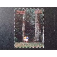 Панама 1998 туризм, деревья