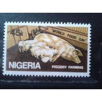 Нигерия 1981 Свиньи**