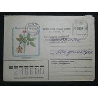 1982 женьшень прошло почту