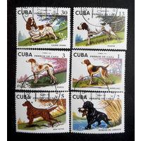 Куба 1976 г. Охотничьи собаки. Фауна. полная серия из 6 марок #0041-Ф1