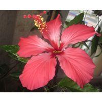 Растения комнатныеи(крупномеры)