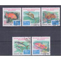 [409] Мадагаскар 1982. Фауна.Рыбы. Гашеная серия.