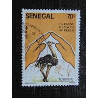 Сенегал 1995 г. Фауна.