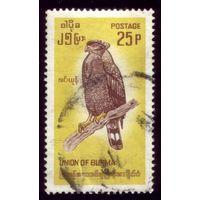 1 марка 1968 год Бирма Птичка 205