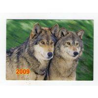 2009 волки (9)