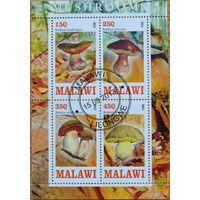 Грибы, блок, Малави