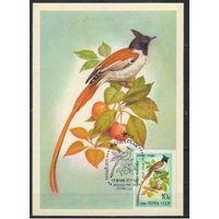 СССР Картмаксимум 1981 Певчие птицы Райская мухоловка #5154