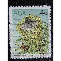 ЮАР 1977г. Флора.