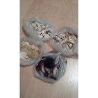 Ракушки для аквариума или поделок 4 вида