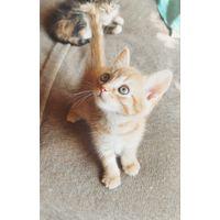 Домашние котята в ДАР