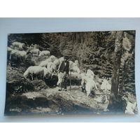 Открытка старинная(пастух)