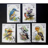 Венгрия 1990 г. Птицы. Фауна, полная серия из 5 марок #0169-Ф1