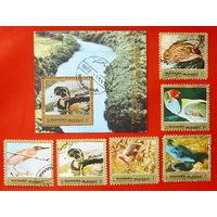 ОАЭ. Манама. Птицы. ( Блок и 7 марок ) 1972 года.
