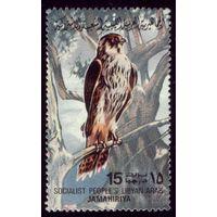 1 марка 1982 год Ливия Птичка 1003