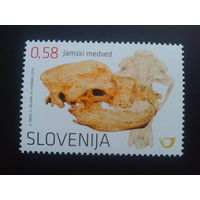 Словения 2016 череп медведя, археология
