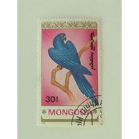 Монголия 1990. Попугай