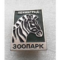 Ленинград. Зоопарк. Зебра. Животные #0157-UP6