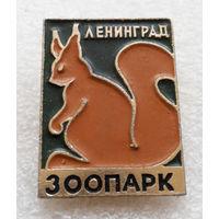 Ленинград. Зоопарк. Белка. Животные #0289-UP12