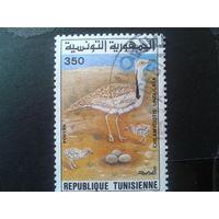 Тунис 1995 птица