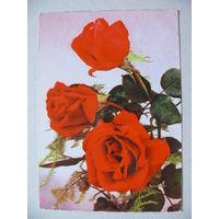 Открытка ГДР, Цветы (46), 1965, чистая.