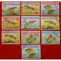 Гвинея. Рыбы. ( 10 марок ) 1964 года.