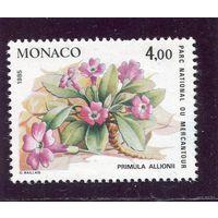 Монако. Из серии Цветы. Концовка серии.