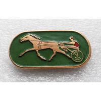 Скачки. Лошадиные бега. Ипподром. Лошадь. Спорт #0204-SP6