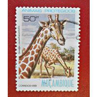 Мозамбик, 1981г., фауна, жирафы