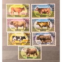 Монголия.1985г.Коровы.