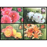 Картмаксимумы 2014 Беларусь 1023-1026 Флора. Цветы (4 КМ)**