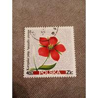 Польша 1967. Цветы. Anagallis Arvensis