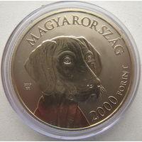 Венгрия 2000 форинтов 2019 г. Венгерские овчарки и породы охотничьих собак. Венгерская выжла
